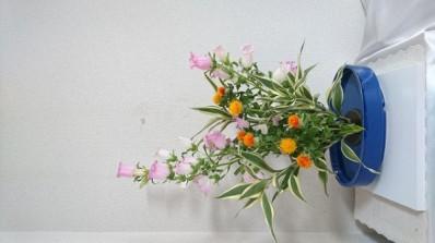 カンパニュラの色彩盛り花